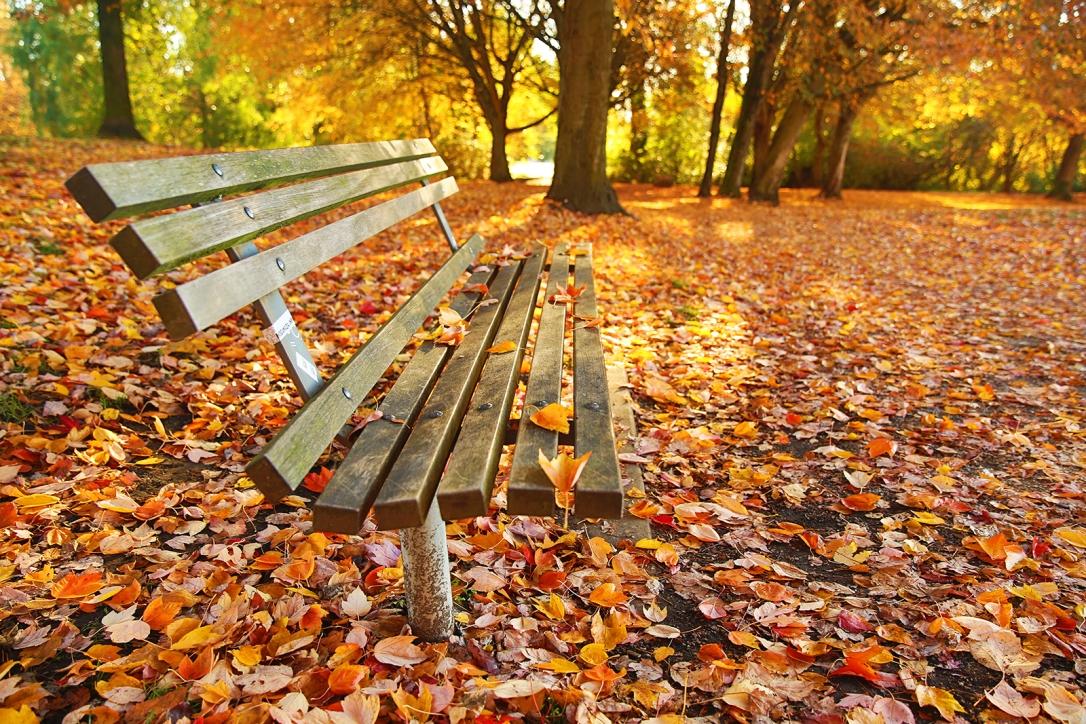 autumn_park_craig_robison