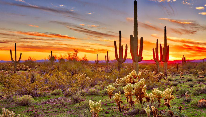 Desert V